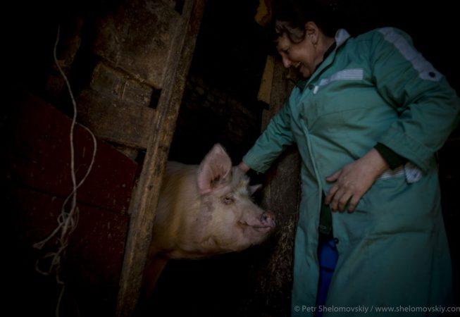 Valentina Lomonosova, 52, a paramedic of a local ambulance service pets her boar named Vaska in Starye Bobovichi village in Western Russia
