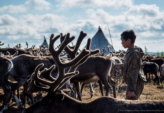 15 yo Timofey Yadne prepares to catch a reindeer in the family herding camp on the left bank of Yenisey river in West Siberia