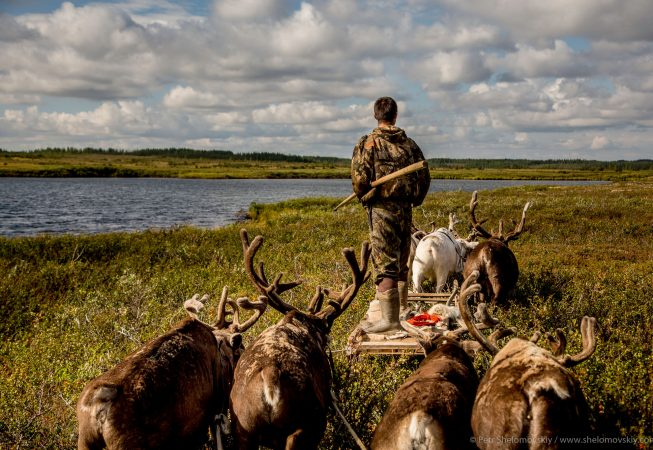 21 yo Nikolay Yadne is driving a reindeer team through tundra near the family herding camp on the left bank of Yenisey river in West Siberia