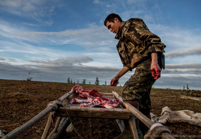 21 yo Nikolay Yadne is skinning a fawn in the family herding camp on the left bank of Yenisey river in West Siberia