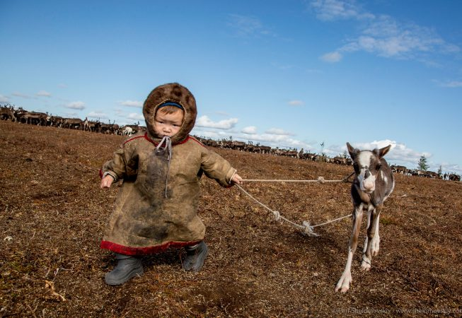 Little Bogdan is playing big with his pet fawn Khoreku in Yadne family herding camp on the left bank of Yenisey river in West Siberia