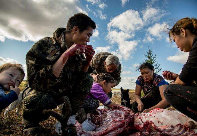 Yadne family members gather around slaughtered rendeer to enjoy fresh meet and blood in the family herding camp on the left bank of Yenisey river in West Siberia